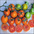 Jaune Flamme Heirloom Tomato