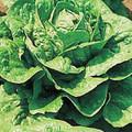 Lettuce Parris Island