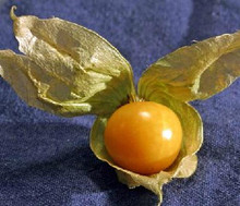 Ground Cherry Tomato