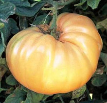 Goldie Heirloom Tomato