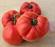 German Giant Heirloom Tomato