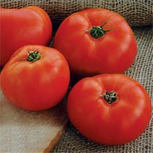 Mountain Glory Tomato