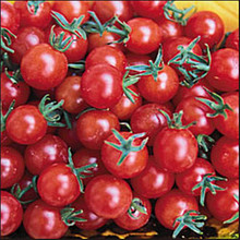 Sweet Pea Tomato