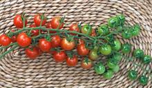 Sugar Lump Tomato Seed