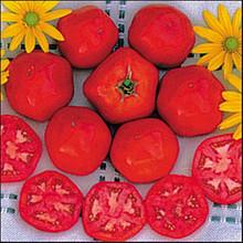 Druzba Tomato