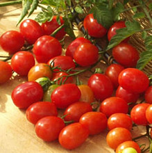 Cupid Tomato
