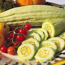 Cucumber Armenian Yard Long