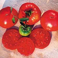Crnkovic Yugoslavian Heirloom Tomato