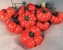 Costoluto Genovese The Ugly Tomato