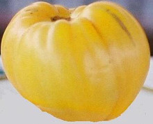 Oxheart Yellow Tomato