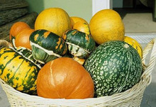 Large Fruits Mixed Gourd