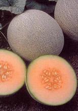 Cantaloupe Ambrosia