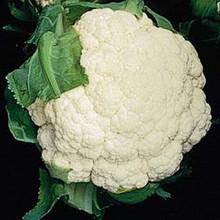 Cauliflower Snow Crown