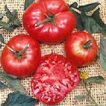 Brandywine Red Potato Leaf Tomato