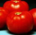 Better Bush Tomato Seed