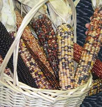 American Way Ornamental Corn