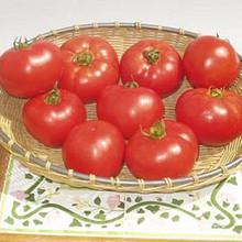 Amelia Tomato Seed