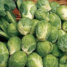 Gustus Brussel Sprouts
