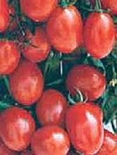 A Grappoli Corbarino Tomato Seed