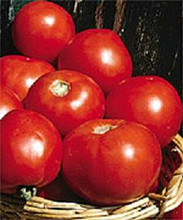 Basket Vee Tomato