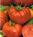Boy Oh Boy F1 Tomato Seed