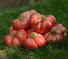 Big Brandy Tomato Seed