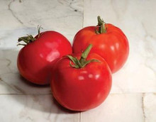 Charger Tomato Seeds