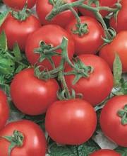 Early Choice Hybrid Tomato Seeds