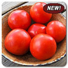Iron Lady F1 Tomato