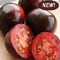 Indigo Rose Tomato Seeds