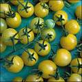 Lemon Drop F1 Tomato Seeds