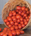 Sonoma Grape Tomato Seeds