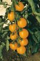 Sweet Million Gold Tomato Seeds
