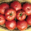 Brandywine Sudduth Strain Tomato Seeds