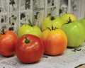 Longkeeper Red Tomato Seeds