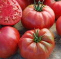 Mrs Maxwell Big Italian Tomato Seeds