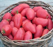 Saucelicious Tomato