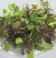 Micro Salad Mix Spicy Greens Seeds