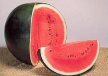 Watermelon  Sugar Baby