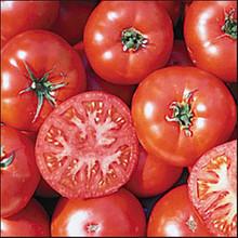 Trophy  Heirloom Tomato