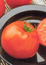 Jetsetter Tomato