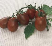 Black Plum Paste Tomato