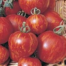 Tigerella Tomato Seed