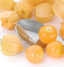 Tomatillo Seed Goldie Husk Tomato