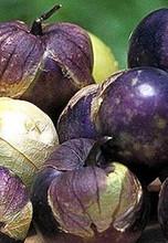 Tomatillo Purple Tomato Seed