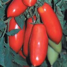 Super Marzano Tomato