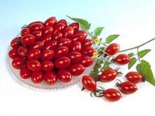 Sugary Tomato