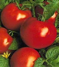 St Pierre Heirloom Tomato