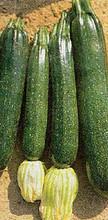 Squash Summer Black Beauty Vegetable