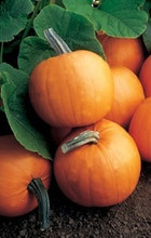 Pumpkin Orange Smoothie Vegetable Seeds